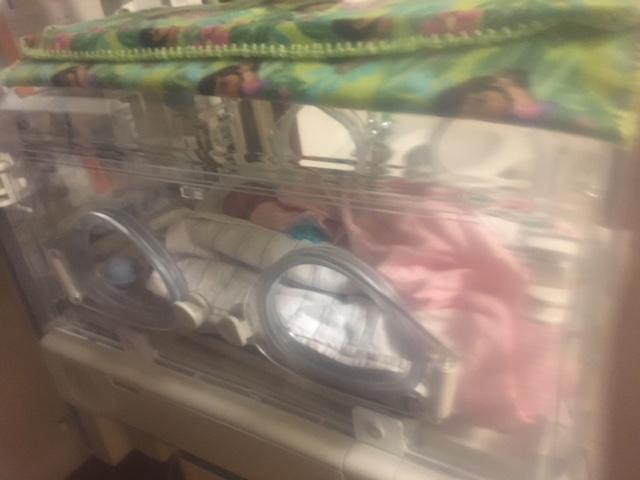 adopt incubator